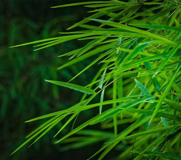 bamboo-leaves0